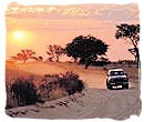 Self-drive safari in the Kruger National Park, South Africa
