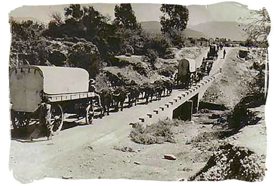 1938 photograph of a column of ox wagons in commemoration of the Great Trek in South Africa