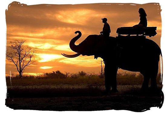 Elephant ride - South Africa Tours, Best Safari Tours of South Africa