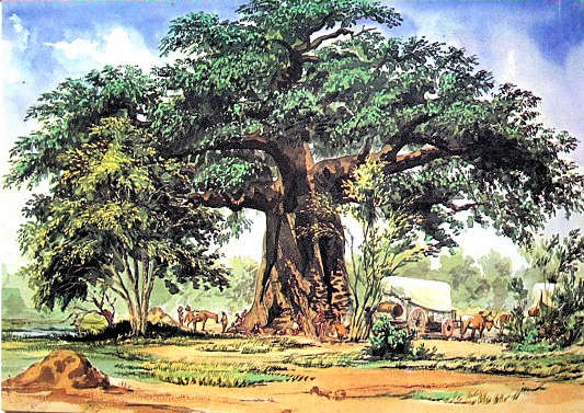 Baobab Tree, a watercolour painted by Thomas Baines 1820-1875, dated 29 December 1861 - South African Art, Art Galleries in South Africa, South African Artists