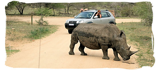 When driving in South Africa in a rural area, be on the lookout for wildlife on the road