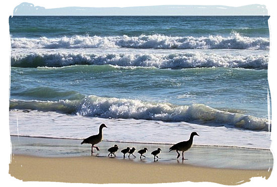 Strange beach combers - Cape Town holiday attractions, Table Mountain National Park