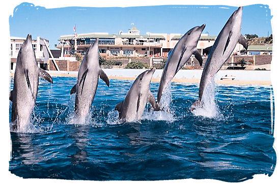 Daily dolphin show at the Ushaka Marine World, the world's 5th largest aquarium
