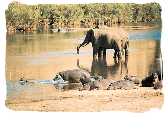 Elephants and Hippos near Punda Maria rest camp