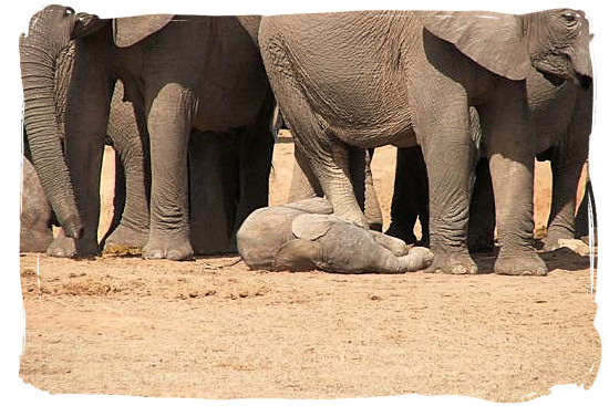 Born just now, in the Addo Elephant National Park - The Addo Weather in South Africa's Addo Elephant Park