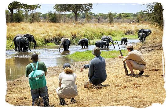 Meeting a herd of Elephants on foot