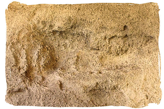 Pre-historic fossilized footprints, called Eve's Footprints - West Coast National Park Attractions, South Africa National Parks