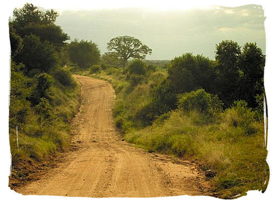 Dirt road in evening sun in the Kruger National Park