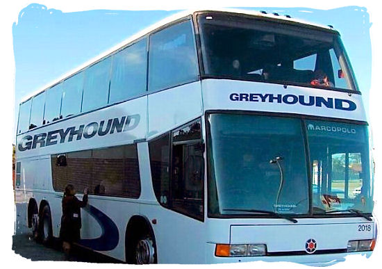 The Greyhound Bus service operates between a network of cities within South Africa