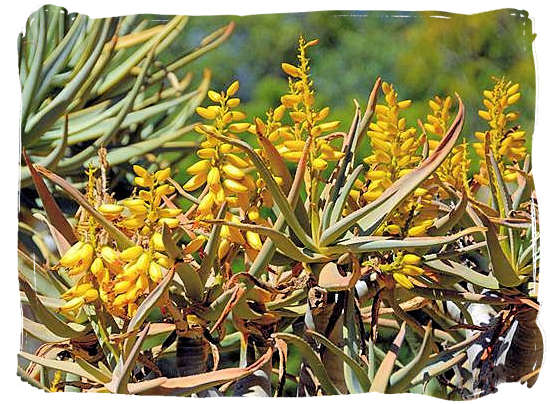 Flowering Quiver tree