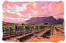 Vineyard in the Franschhoek wine region in South Africa