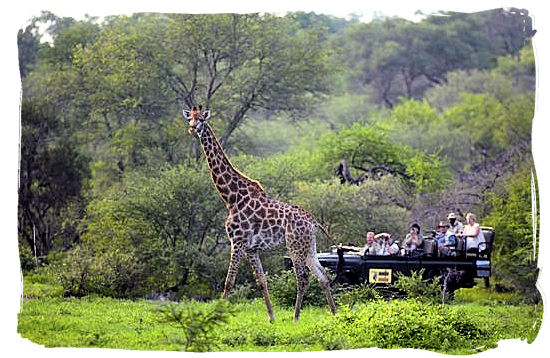 Game drive and Giraffe encounter - Tsendze camp