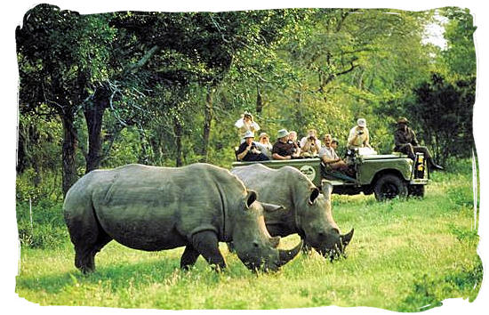 Game drive encounters pair of Rhinos - Kruger National Park Camps, Kruger National Park, Map, Tours, Safaris
