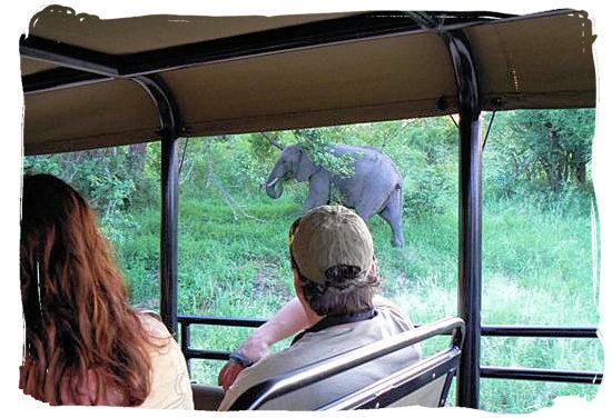 View from game drive vehicle - Shimuwini bushveld camp, Kruger National Park