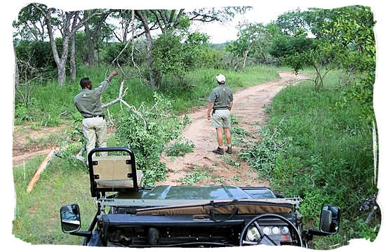 Game rangers in the African bushveld