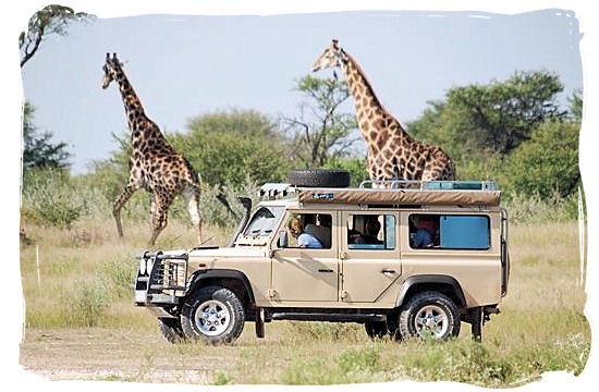 Giraffe encounter on a self-drive safari in Botswana