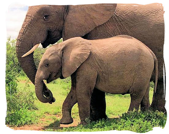 Mom and daughter holding trunks - Addo Elephant Park accommodation