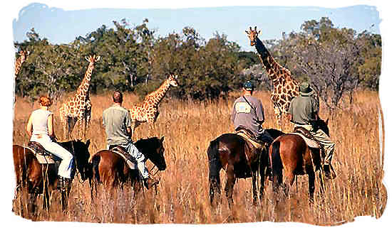 Discovering the African bushveld and its wildlife on horseback