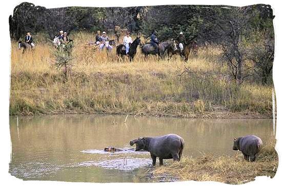 Horseback safari - Mabula game lodge