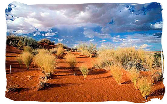 Kalahari semi-desert landscape - Kgalagadi Transfrontier Park in the Kalahari
