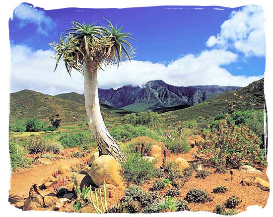 Karoo landscape - Camdeboo National Park (previously Karoo Nature Reserve