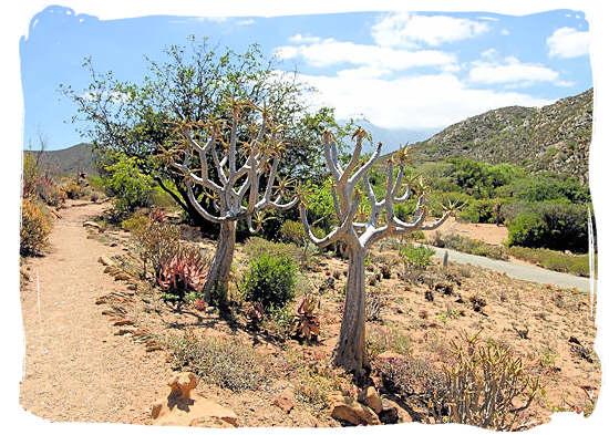 Landscape of the National Karoo Botanical Gardens at Worcester - Karoo Accommodation, Karoo National Park South Africa