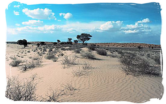 The arid wilderness of the Kalahari desert - Kgalagadi Transfrontier Park