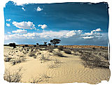 Kalahari desert landscape in the Kgalagadi National Park