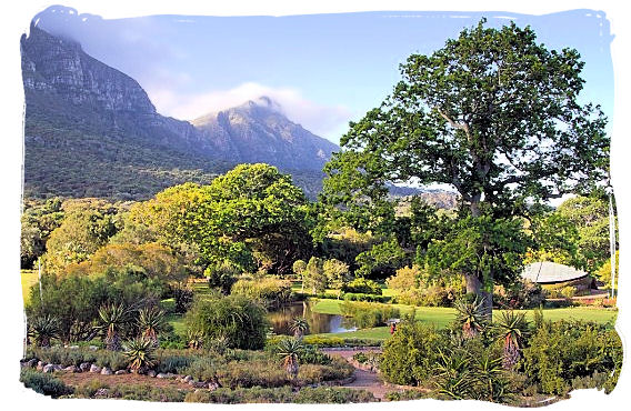 Scene inside the Kirstenbosch National Botanic Gardens with Table Mountain as its backdrop
