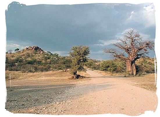 Landscape in Mapungubwe National Park- Mapungubwe region