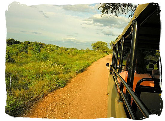 Late afternoon game drive in the Kruger National Park