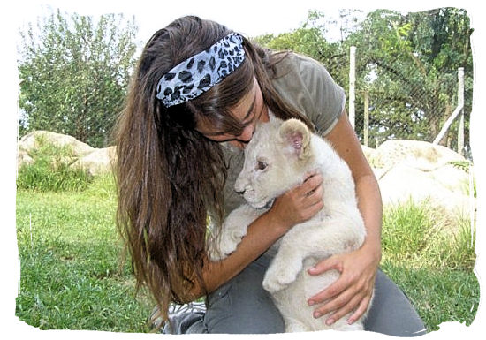 Cuddling a rare white lion pup at the Lion Park near Johannesburg - Johannesburg Weather Forecast and Conditions