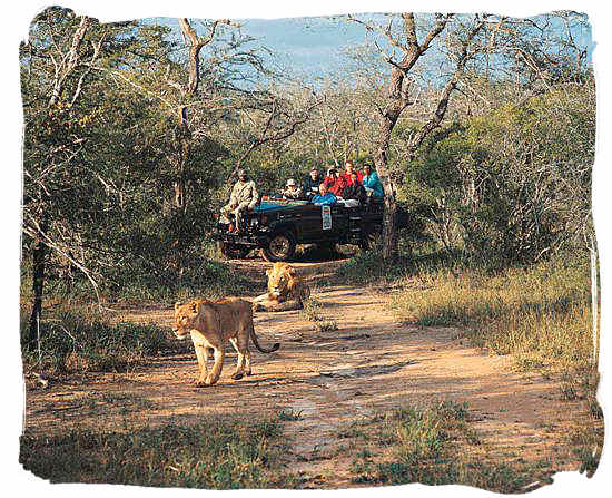 And lioness in the african bushveld best africa safaris african