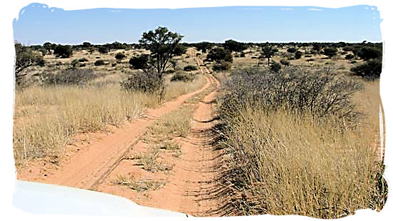 Typical Kgalagadi 4x4 wilderness track - Kgalagadi Transfrontier Park in the Kalahari