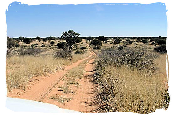 4x4 Wilderness track in the Kgalagadi Transfrontier National Park in the Kalahari, South Africa