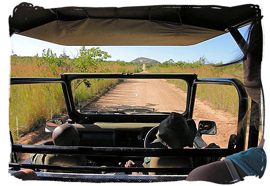 Morning game drive in the Kruger National Park