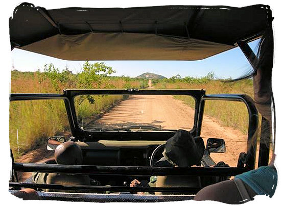 Game drive in the Pretoriuskop region