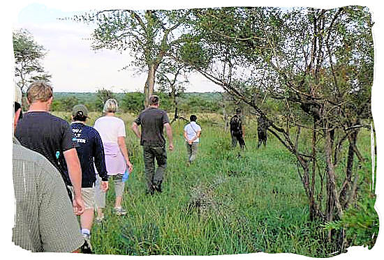 Morning bushwalk in the region around Boulders Bush Lodge in the Kruger National Park, South Africa
