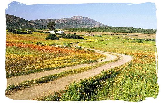 Roadside Namaqua flower panorama - Namaqualand flowers spectacle, Namaqualand National Park South Africa