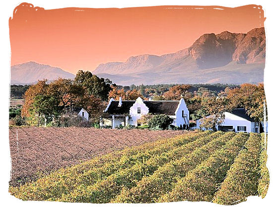A wine estate in the Cape Winelands