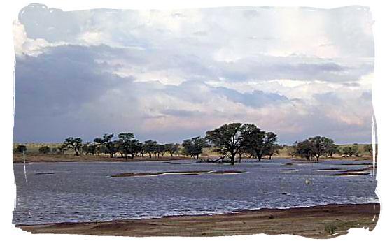The Kalahari after a few of those rare heavy thunder storms - Kalahari Desert Climate in the Kgalagadi Transfrontier National Park