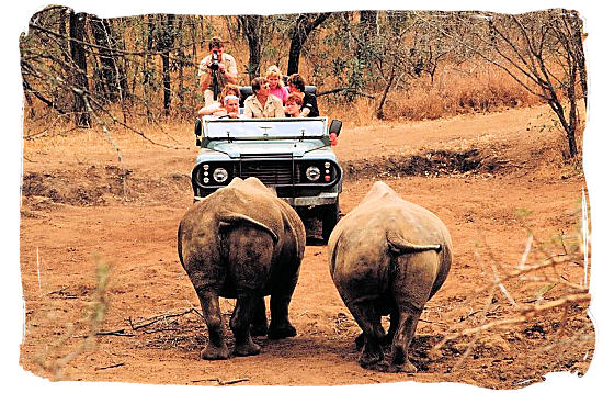 Game drive meets Rhino duo heads on
