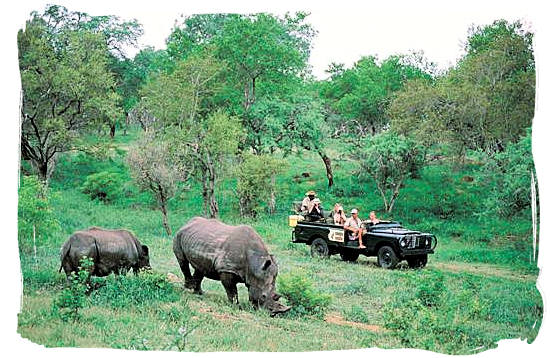 Rhino encounter on a game drive