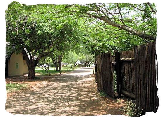 Road and landscape inside the camp - Crocodile Bridge Rest Camp in the Kruger National Park