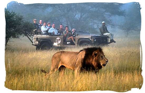 Lion encounter in the luxury Sabi Sabi game reserve