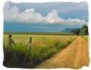 Gravel road in the Orange Free State