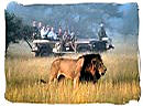 Luxury 5 star safari in South Africa