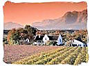 Wine lands in the Paarl South africa