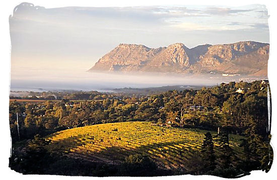 South Africa's wine lands, against the backdrop of rugged indigo mountains
