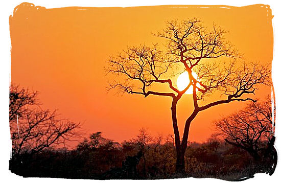 Sunrise over the African bushveld